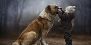 It Simply Magical How These Animals React to These 2 Little Boys…I'm Out of Words
