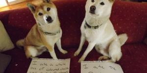 30 Dogs Who got Caught in Action: You'll Crack Up When You Find Out What They Did