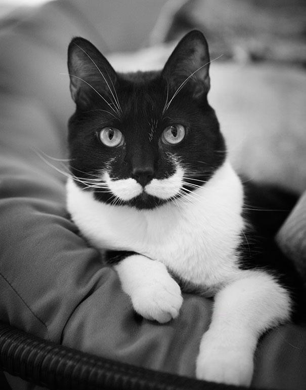 animals-with-mustache- (1)