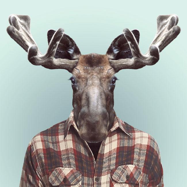 Zoo-Portraits-PHUNRISE-3