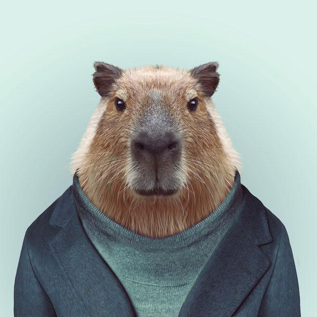 Zoo-Portraits-PHUNRISE-7