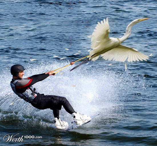 birdsurf