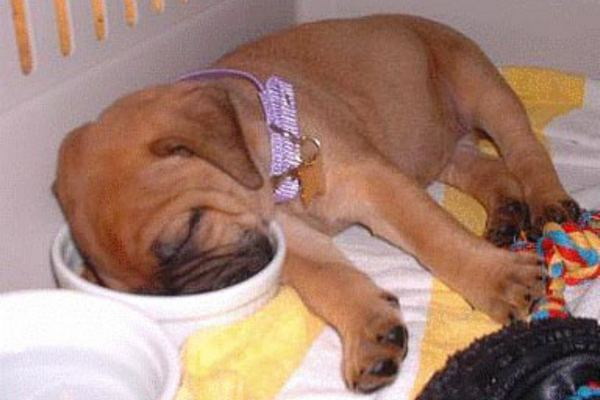 puppy_sleeping_4